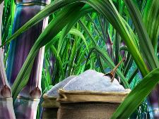 食品级阳离子聚丙烯酰胺-制糖絮凝剂厂家-东保化工